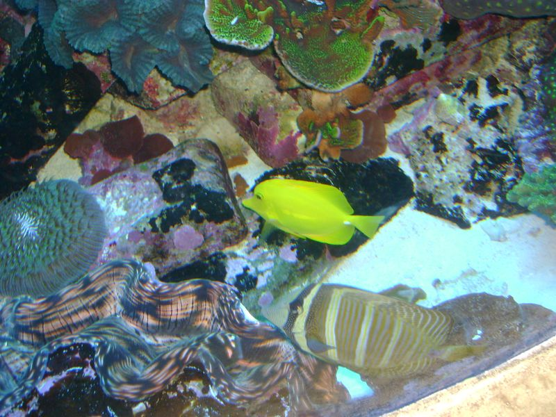 aquarium einrichtung wir richten ihr aquarium ein. Black Bedroom Furniture Sets. Home Design Ideas